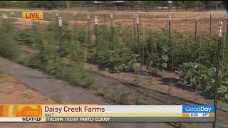 Daisy Creek Farms in Galt - 8am
