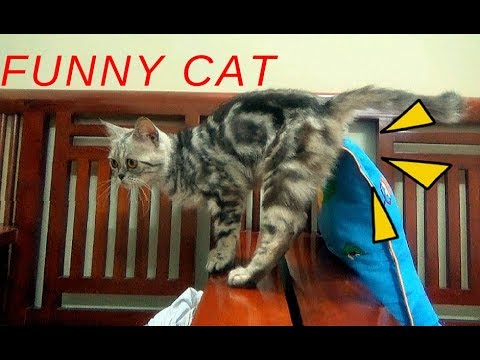 Funny Cat Playing With Toy And Super Swing Toy | Funny Cat Vines 2017 | Meo Cover Home