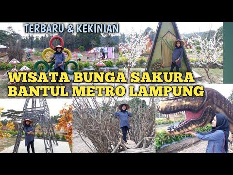Wisata Bunga Sakura Bantul Metro Lampung   Kekinian Abis !