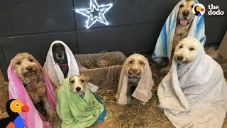 Dogs Who Are Obsessed With Christmas | The Dodo