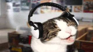 El gato viudo, Chava  Flores.wmv