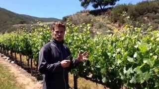 Time in the vineyard with Mark Pisoni.