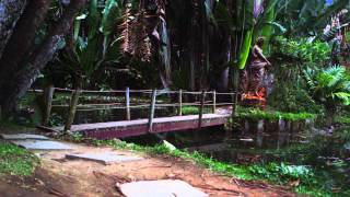 Panning Shot Of Wooden Bridge And Forest In Botanical Garden.