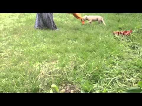 Dogs directly from Mr Tom Garners | FunnyDog TV