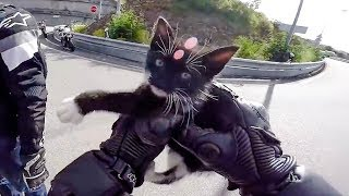 Video BIKERS HELPING ANIMALS & OTHERS IN NEED | RANDOM ACT OF KINDNESS | [Ep. #21] download MP3, 3GP, MP4, WEBM, AVI, FLV Oktober 2018