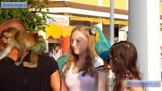 Дивноморское отдых(Дивноморское, отдых у Чёрного моря для всей семьи. Смотрите на видео курорт Дивноморское, отдых на берегу..., 2012-11-27T07:28:54.000Z)
