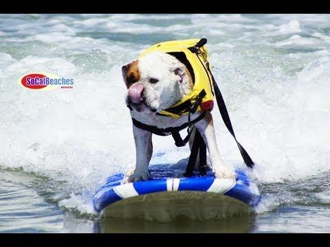 2011 Loews Dog Surfing Contest Imperial Beach San Diego