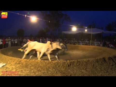 DHALIWAL (Jalandhar)    ਬਲਦਾਂ ਦੀਆਂ ਹੱਲਟ ਦੌੜਾਂ - 2016 ਦੀ ਜੇਤੂ ਜੋੜੀ    Full HD   