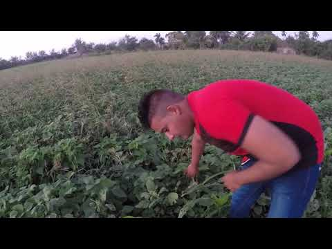 Video de Velasco