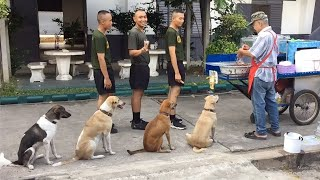 Amazing Good Dogs   Best of Training and Discipline Dog Compilation 2020
