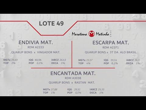 LOTE 49 Maratona Matinha