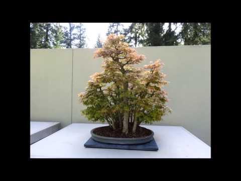 Weyerhaeuser Bonsai Gardens