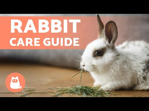 How to TAKE CARE of a RABBIT  Complete RABBIT CARE Guide
