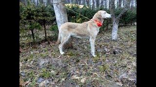 GPS Трекер Для охоты - ДеМС v2 (Де Моя Собака)