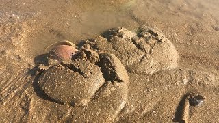 趕海捉不到海鮮?看到這種不規則的沙包不要放過,底下一定有海鮮【海邊小鬥】