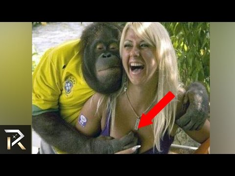 Thumbnail: 10 Most Inappropriate Animal Encounters!