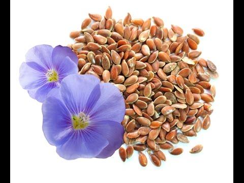 Проросшие семена льна. Как проращивать, польза, применение.
