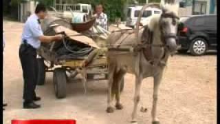 Polis at arabası kullandı  - Gazete32