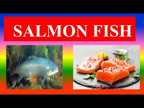 SALMON FISH - HEALTH BENEFITS AND NUTRITION FACTS