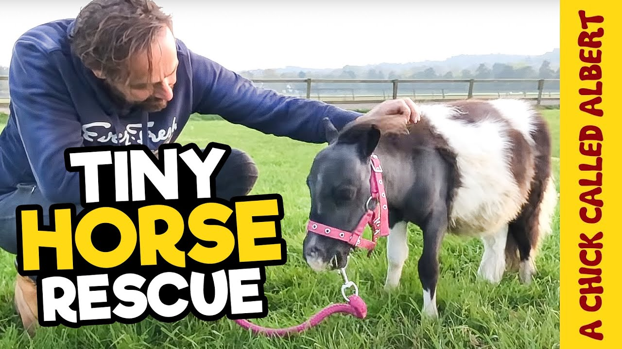 Saving the Smallest Horse I had ever seen