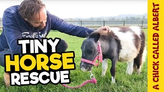 The Smallest horse you have ever seen