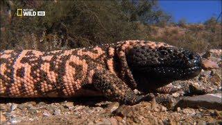 Самые опасные животные -  От пустыни до саванны HD