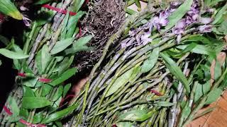 Tối 1/4 vừa về 41 loại hoa lan bán giá sỷ + lẻ mềm chưa từng có .. Lh 0348886368