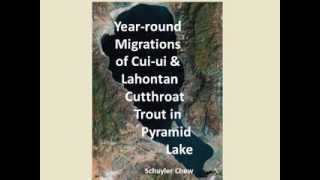 Year-round Migrations of the Cui-ui and Lahontan Cutthroat Trout in Pyramid Lake