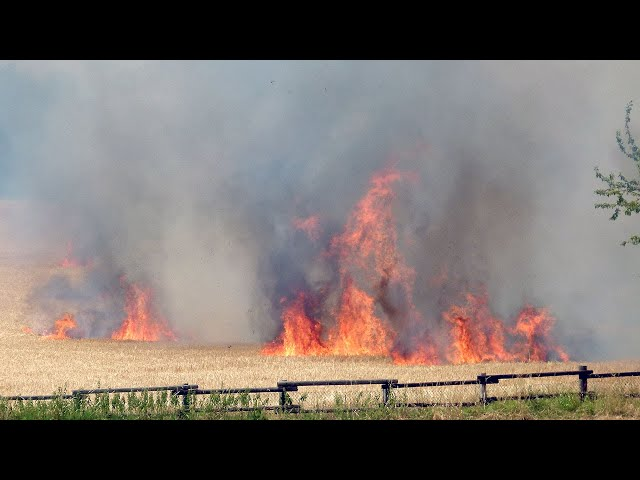 Flächenbrand in Witten-Stockum: Gerstenfeld brennt zwischen Am Katteloh und Mühlenstraße (30.6.)