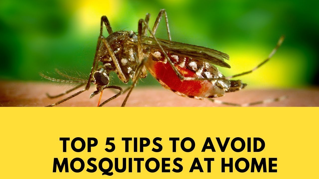 Top 5 Best Home Remedies to Get Rid of Mosquitoes using