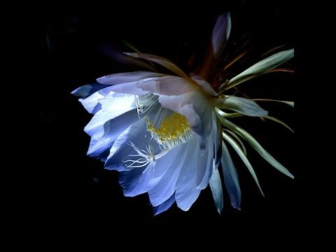 Bluetech & Shulman - Midnight Bloom ( Ojini Project Remix )