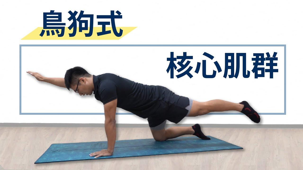 核心肌群訓練運動 - 鳥狗 - YouTube