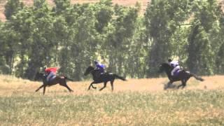 Краснотуранск 6 скачка 2015(Лошади-Horse–Animal-racing-конь-смотреть-онлайн-скачки)