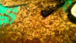 Что течет из трубы!(, 2012-03-17T14:54:59.000Z)
