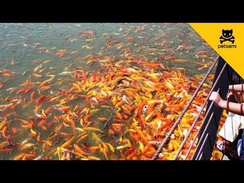 man creates the most effective fishing bait! - youtube, Fishing Bait