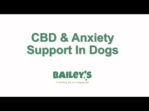 cbd-&-anxiety-support-in-dogs
