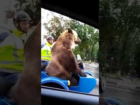 Casual day in Russia, Bear plays vuvuzela on Motorcycle