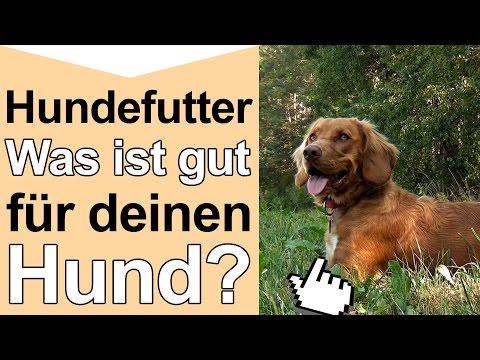 Hundefutter - Was Ist Gutes Hochwertiges Hundefutter Und Artgerechte Hundenahrung Für Deinen Hund?