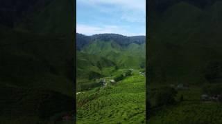 Tea plantation @Cameron Highlands 2016