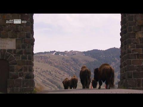 [Doku] Im Zauber der Wildnis - Yellowstone [HD]