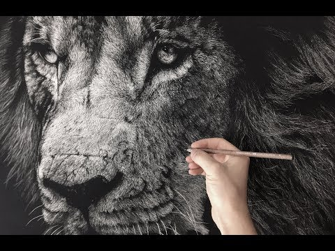 hyperrealistic-lion-drawing/-time-lapse