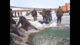 Прикол  Так наши охотники случайно зашли на рыбалку