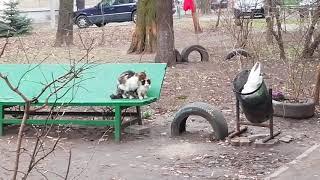Секс на Скамейке (Кот+Кошка)