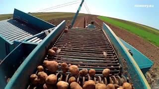 Ciekawostki rolnicze - Wykopki