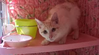 淡路島で保護された子猫たちです。 里親募集中。 自分からすり寄ってく...