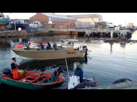 Fishing the snoek run Western Cape South Africa
