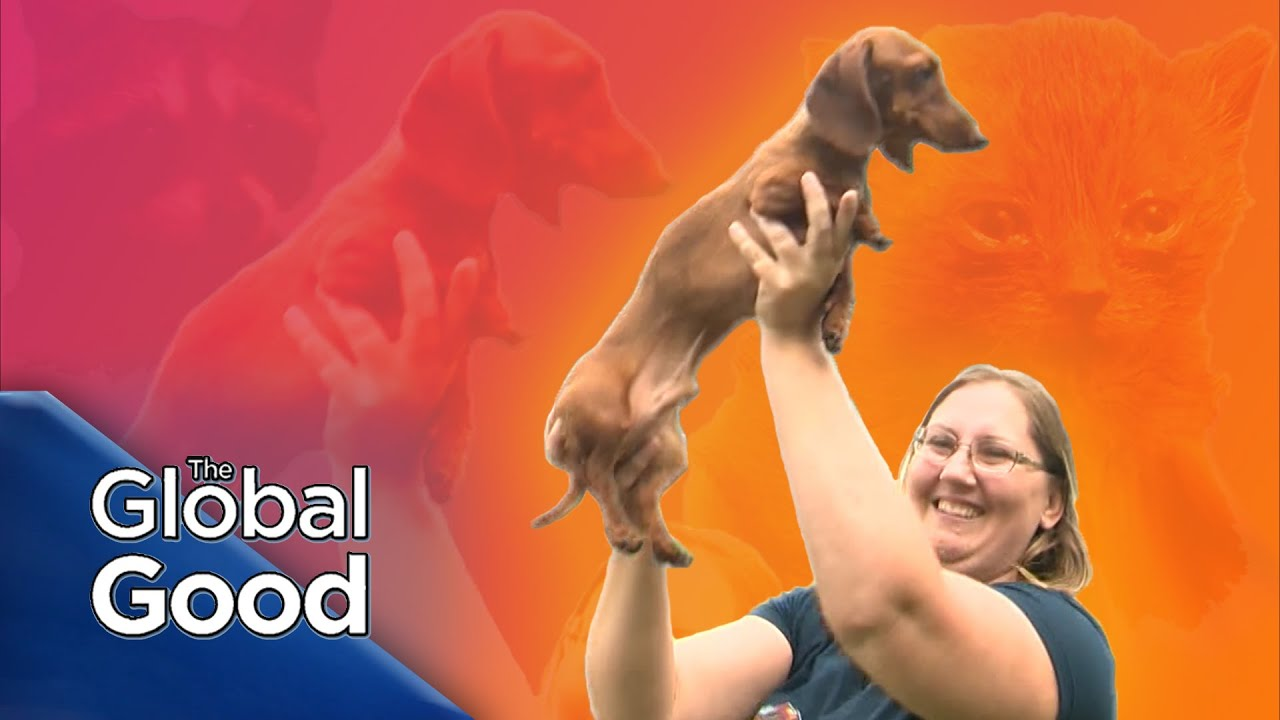 The Global Good | Caring for our fur babies and four-legged friends