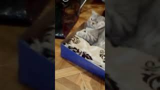 Как сделать кроватку для 🐈 кота