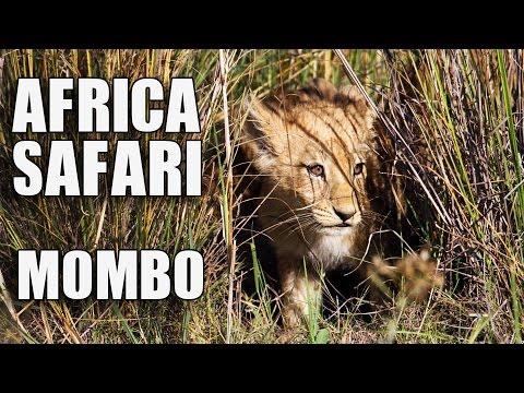 Africa Safari Room Tour: Mombo Camp, Botswana