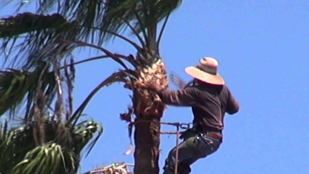 Palm Tree T With A Chainsaw